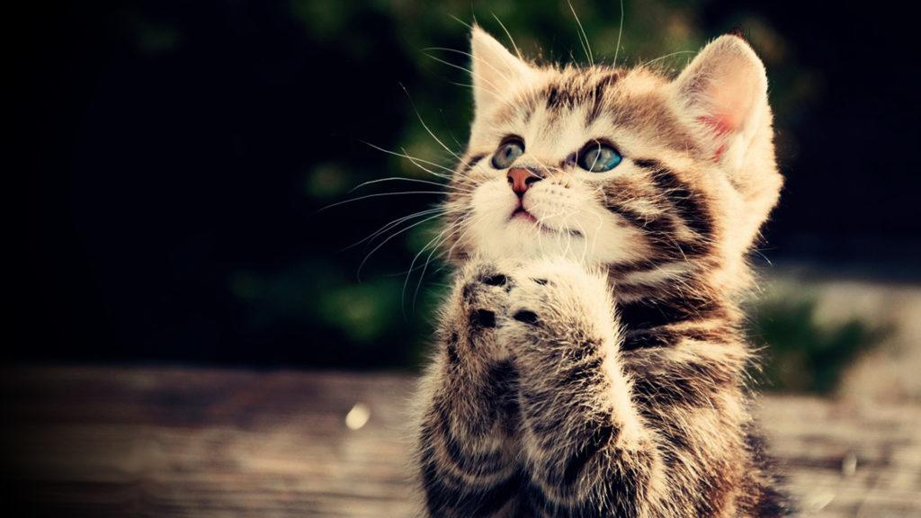 Hopeful cat